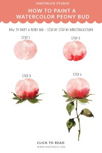 How to paint a watercolor peony bud step by step tutorial-Inkstruck Studio