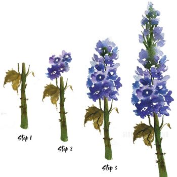 How to paint a watercolor delphinium flower step by step tutorial-Inkstruck Studio